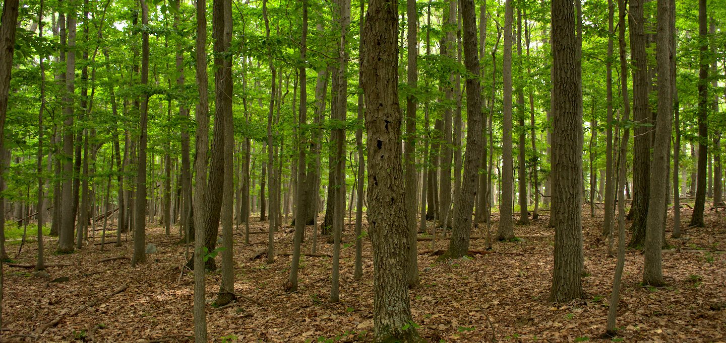 forest catoctin mountain park