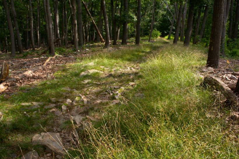 catoctin mountain park trail