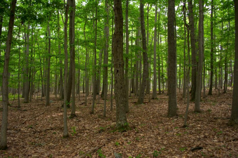 catoctin mountain park forest