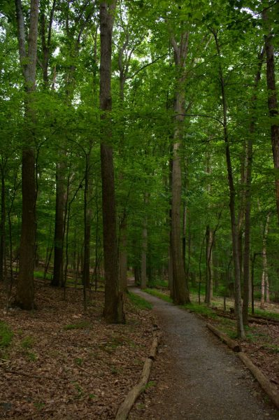 catoctin mountain park forest trail
