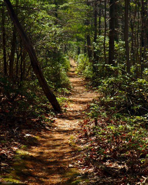 Woodland Trail in Shenandoah National Park