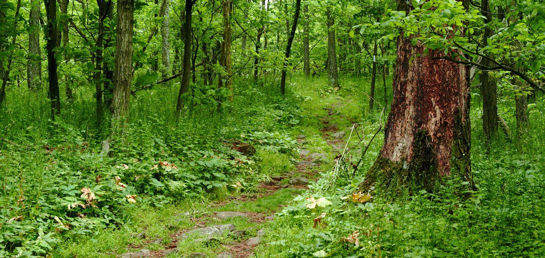 appalachian trail forest green