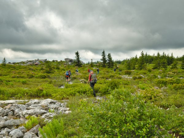 dolly sods wilderness trail