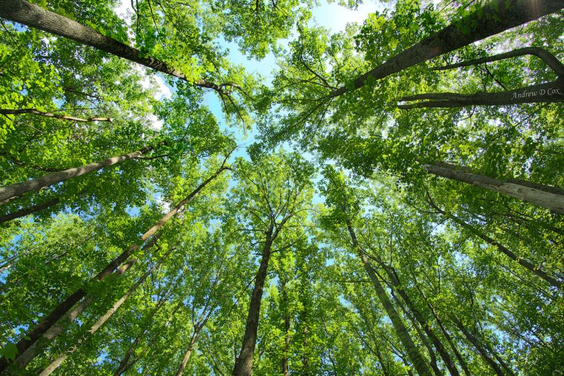 forest canopy HDR