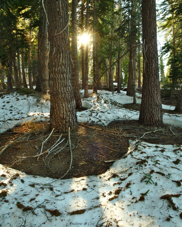 forest snow inyo