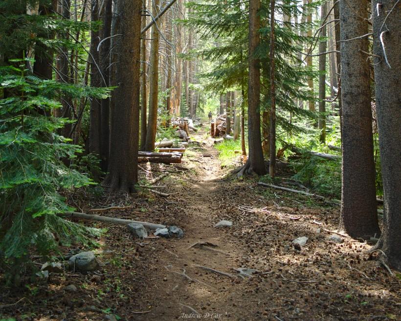 john muir trail woodland forest