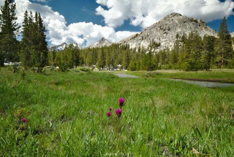 meadow bear creek john muir trail