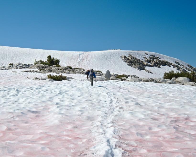 silver pass john muir trail