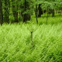 fern appalachian trail