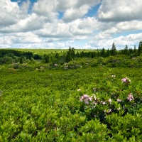 dolly sods wilderness high country