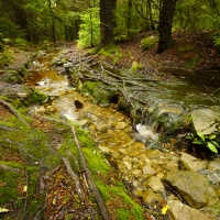 dolly sods wilderness trail stream