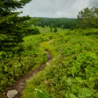 dolly sods wilderness plateau