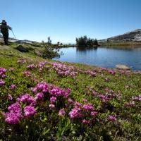 isberg lakes flowers