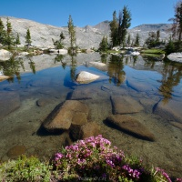 isberg lakes flower boquet