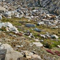 red peak pass meadow stream