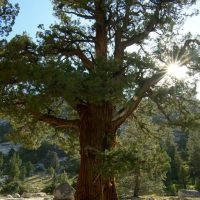 yosemite backcountry wilderness tree