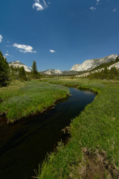 yosemite backcountry wilderness subalpine alpine meadow