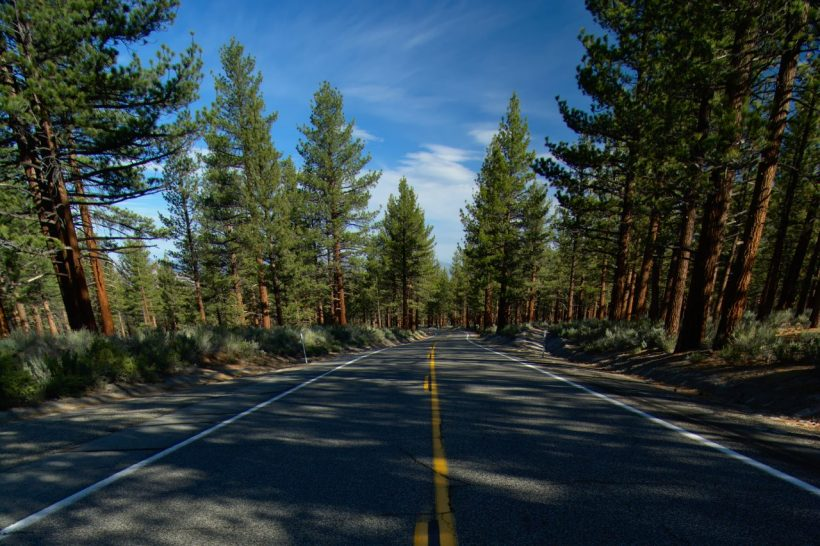 california pine road
