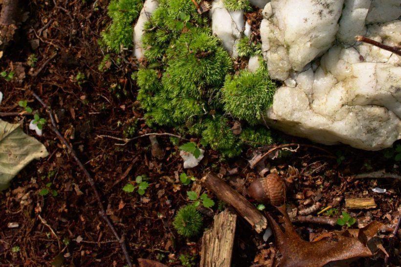 catoctin mountain park ground dirt earth