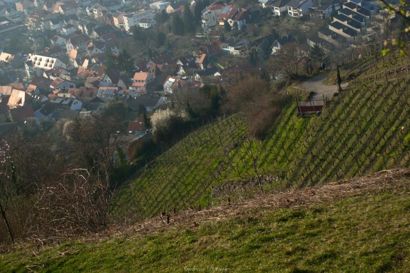 germany vineyard