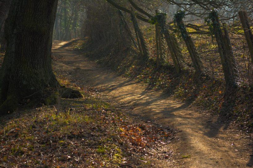 trail germany