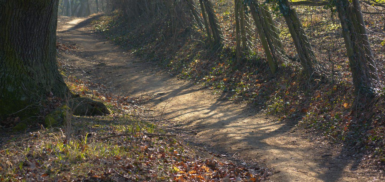 trail Germany Auerbach schloß forest
