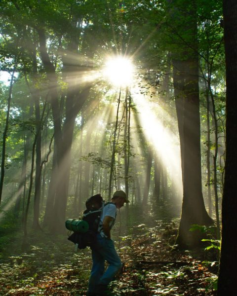 indiana adventure hiking trail forest sun rays