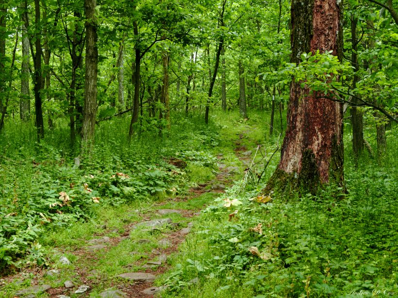 appalachian trail forest green