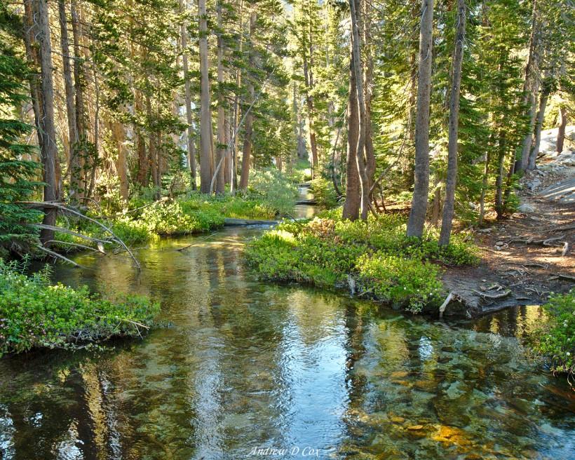 ottoway forest creek