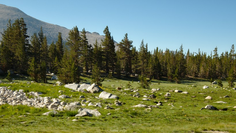 john muir trail deer meadow