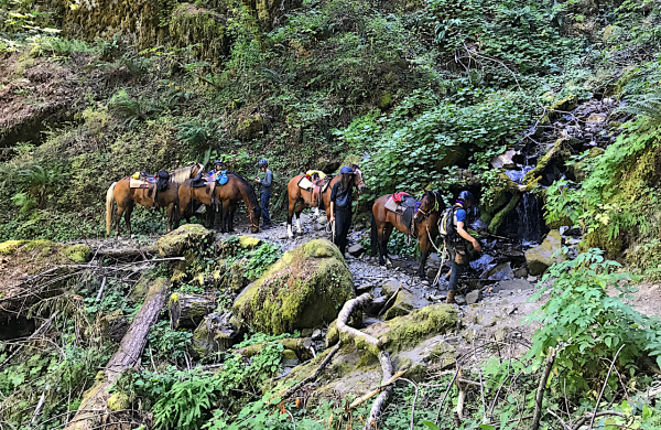 pacific crest trail horse train