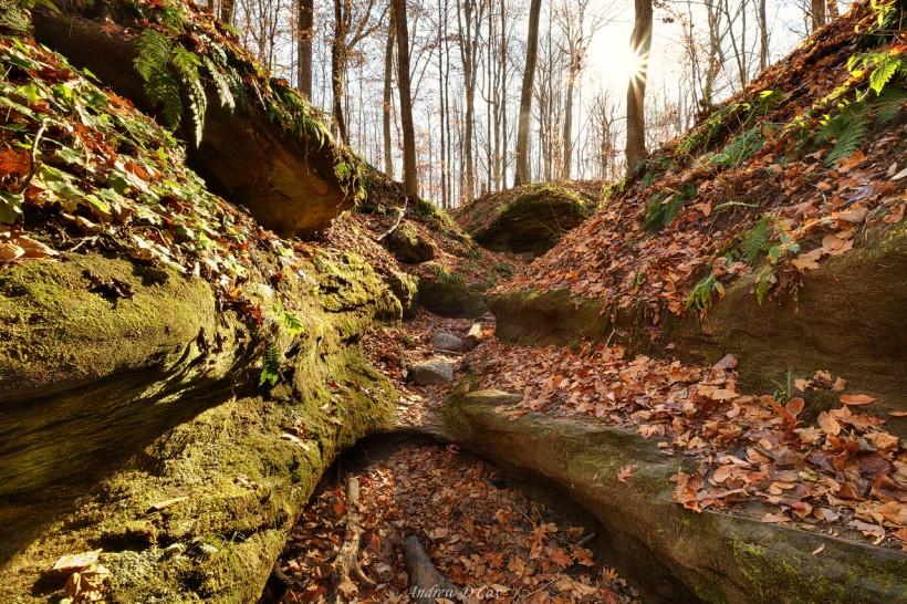 shades state park frisz ravine
