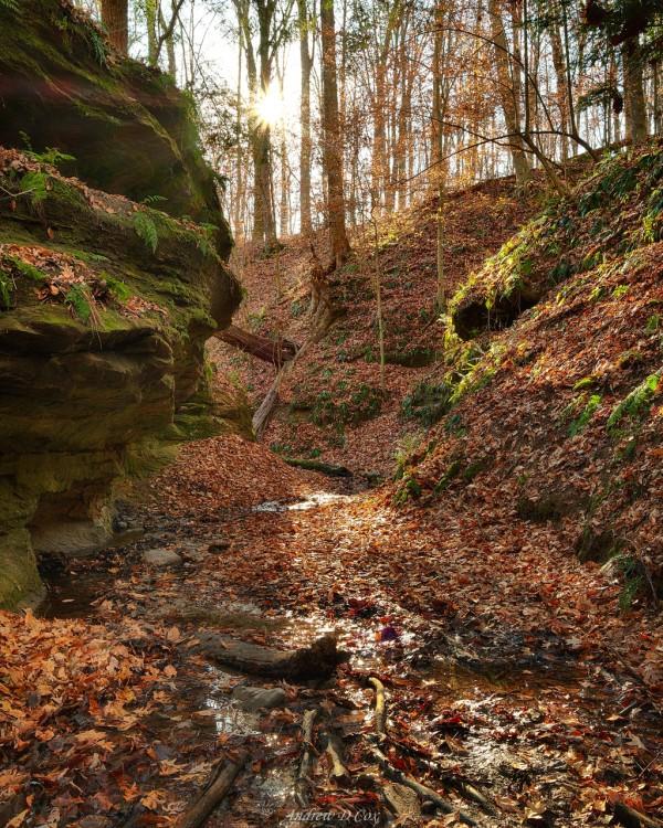 pearl ravine shades state park
