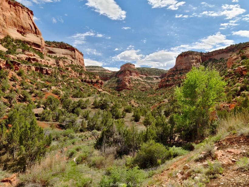 flume canyon mcinnis