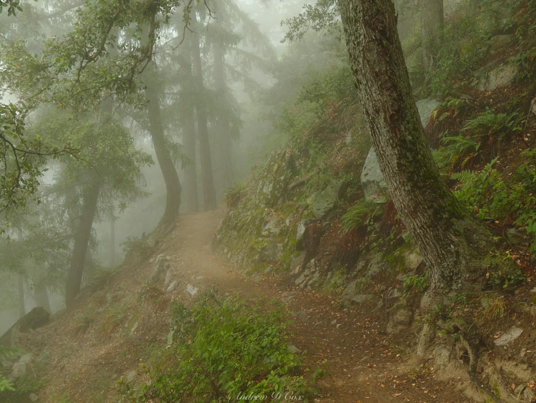 mount wilson mist fog trail
