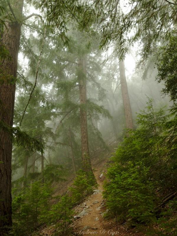 mount wilson mist forest