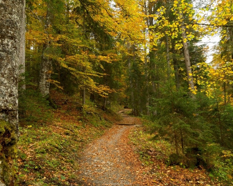 alps trail autumn