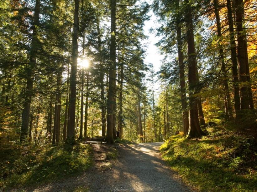 eibsee lake woodland