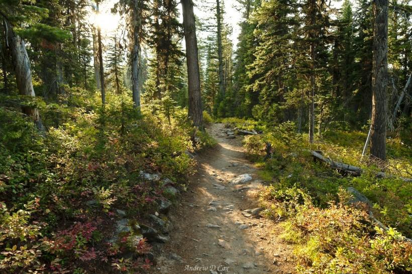 teton mountains forest