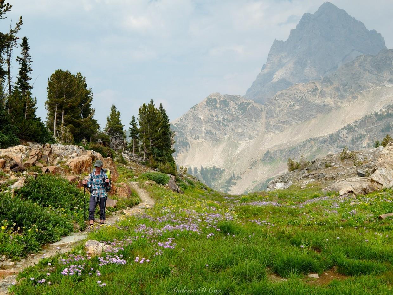 grand teton alpine wildflower