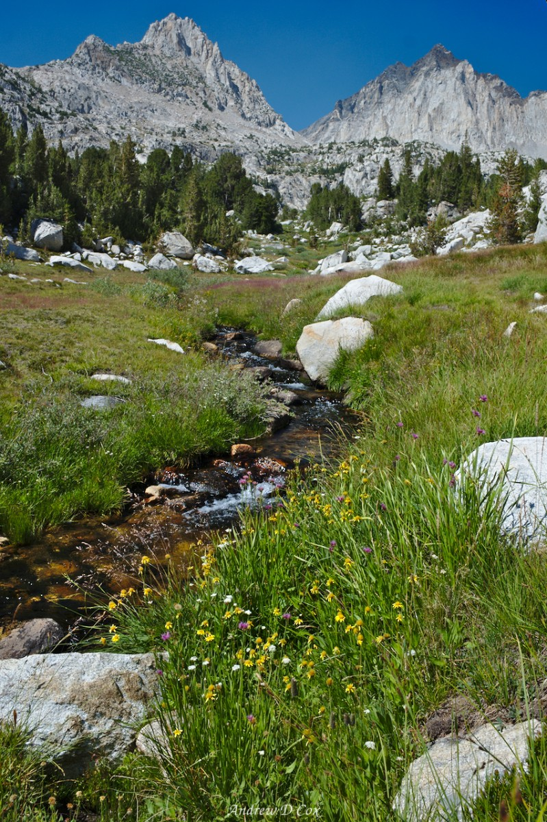 sierra high route creek wildflowers