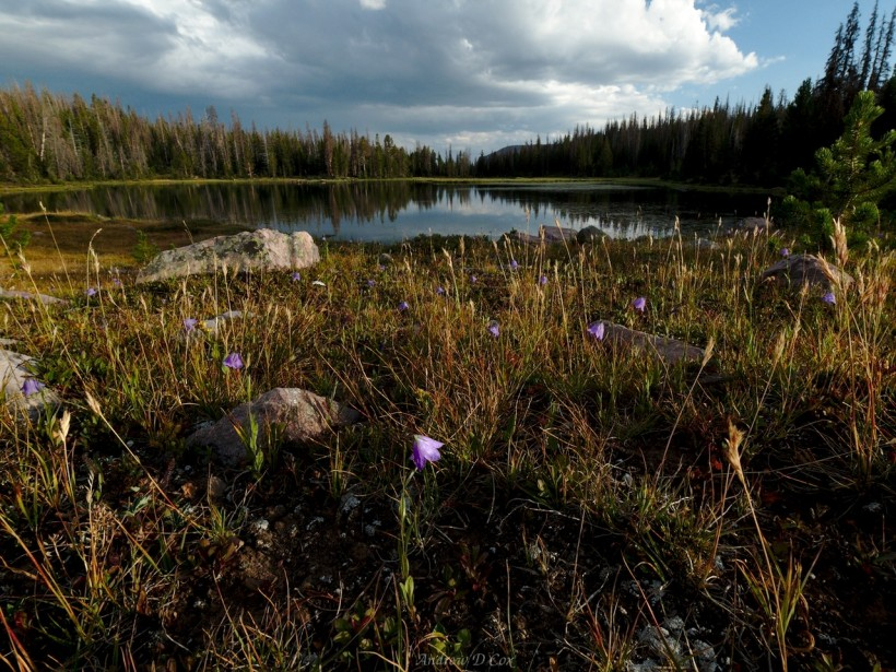 uinta mountains ouray lake harebells