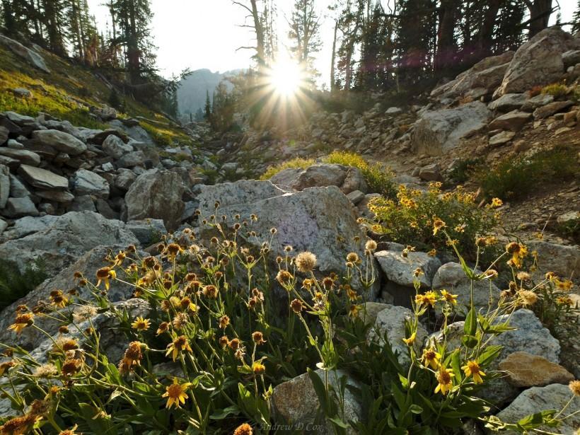 teton mountains wildflowers