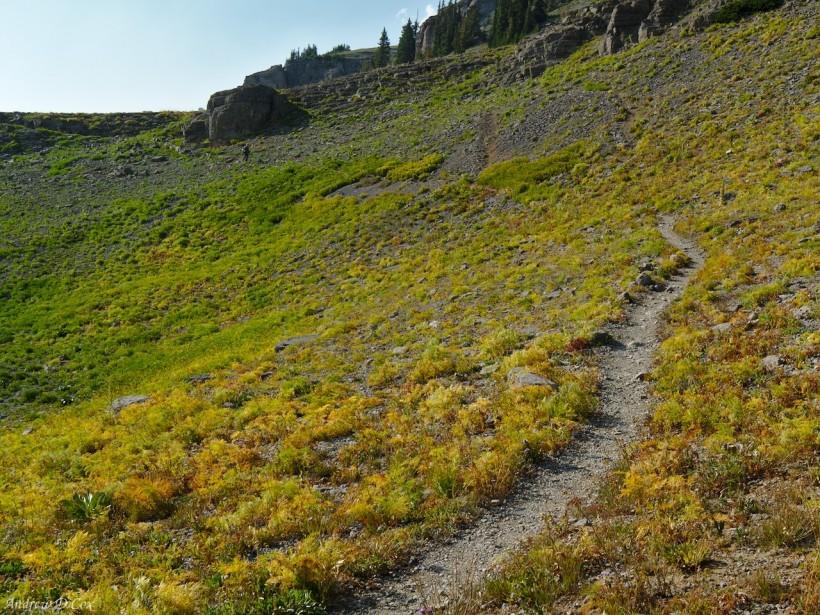 teton mountains colorful grass