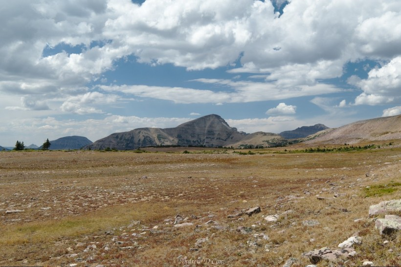 uinta mountains meadows