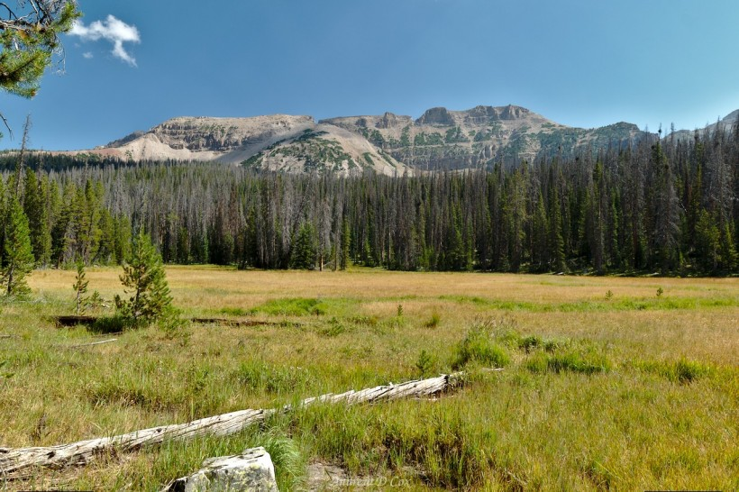 uinta mountain meadow