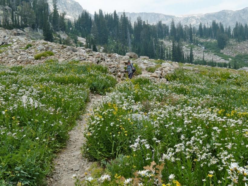 teton mountains wildflower meadow