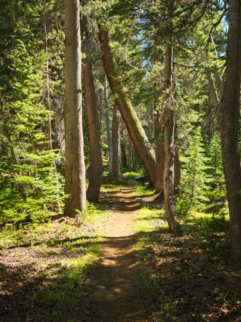 pacific crest trail forest