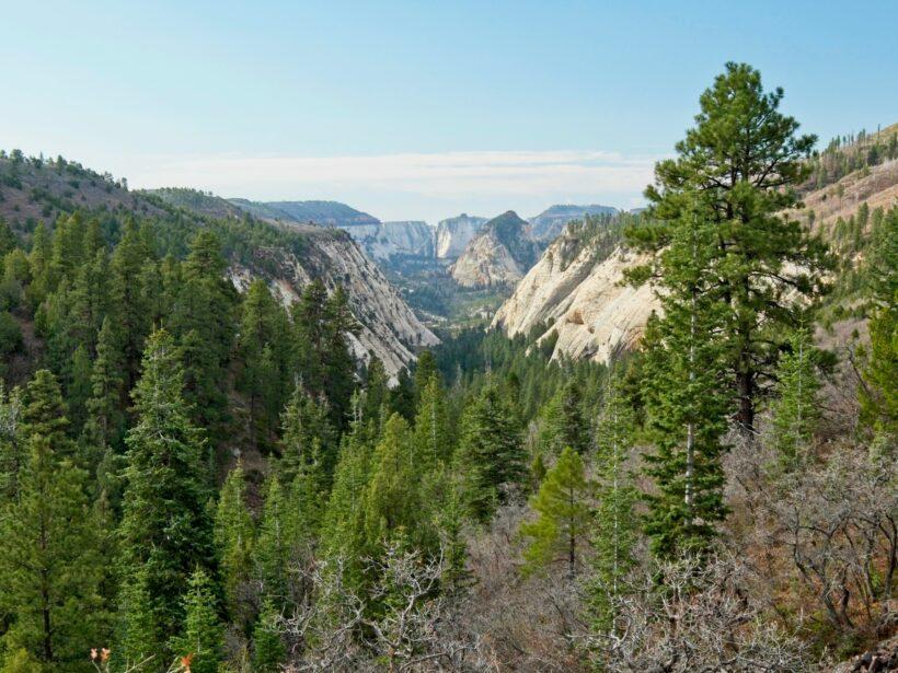 zion national park wildcat canyon