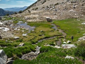 sierra high route alpine meadow